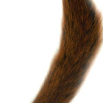 Squirrel Tail Fiery Brown