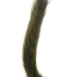 Squirrel Tail Olive