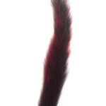 Squirrel Tail Red